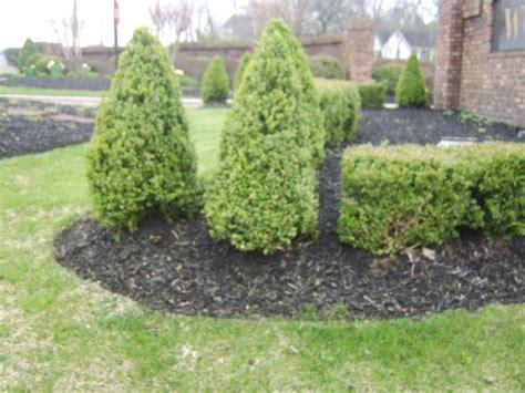 top 28 low maintenance landscaping plants low maintenance landscaping 15 no effort