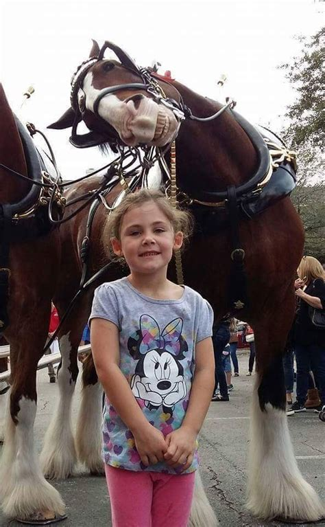best photobomb pictures this clydesdale already has the best photobomb of 2016