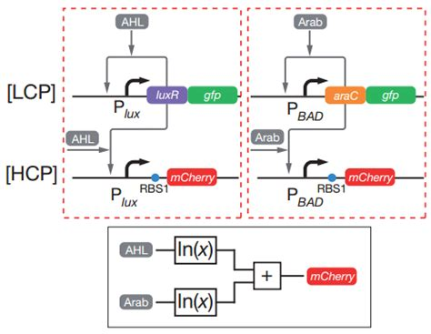 synthetic circuits integrating logic and memory in living cells synthetic circuits integrating logic and memory in living cells 28 images alliance plastics