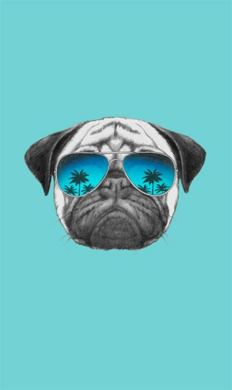 where can i buy pug puppies best 25 pug wallpaper ideas only on