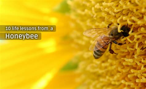 lessons from the hive books the logical optimist 10 lessons from a honeybee