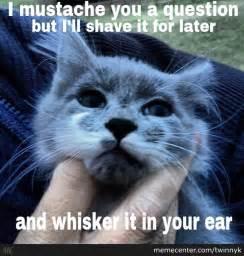 Mustache Cat Meme - mustache cat by twinnyk meme center