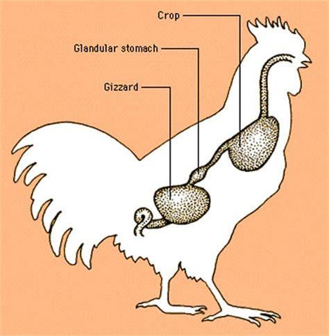a perfect omnivore day 154 gizzards