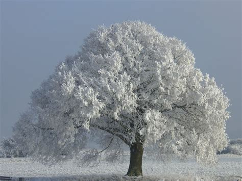 winter tree stock image tree winter 02 by life for sale on