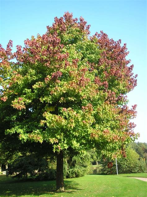 best tree to plant in backyard never plant this tree in your yard best trees to plant