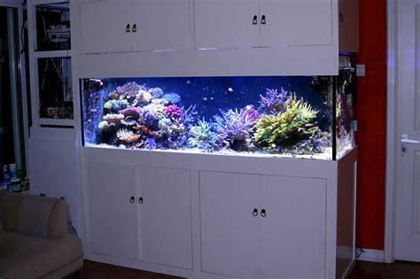 Fan Diy Aquascape Tank 30 70 Reefkeeping Magazine Tank Of The Month