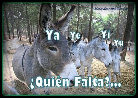 imagenes graciosos de burros chistes de burros cortos y graciosos chistes de animales