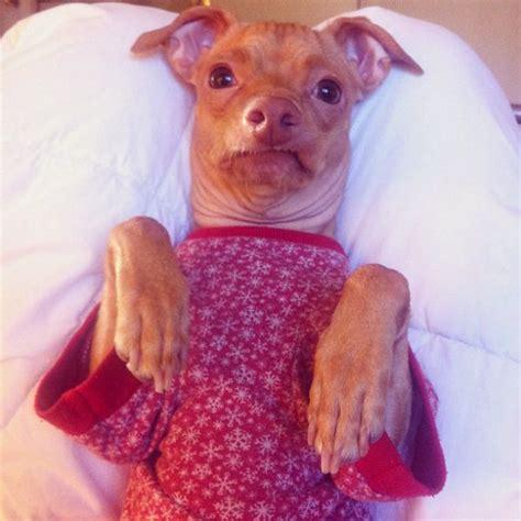 Ugly Smile Meme - the most adorable ugly dog ever 23 pics izismile com