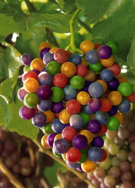 internet art gallery new flavored grapes