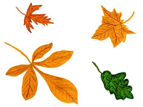 clipart autunno illustrazione gratis foglie autunno acquerello