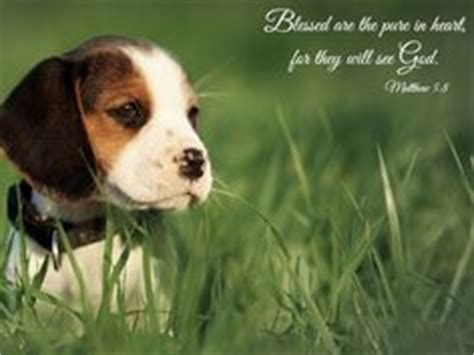 bible verses about dogs animals bible verses on psalms proverbs and the lord