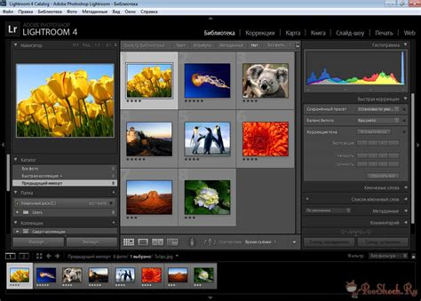 lightroom tutorial adobe tv скачать adobe lightroom crack 3 бесплатно