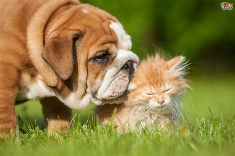 how many sets of do puppies need reasons why cats are easier to look after than dogs pets4homes