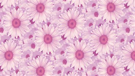 daisy pattern hd pink daisy background wallpaper