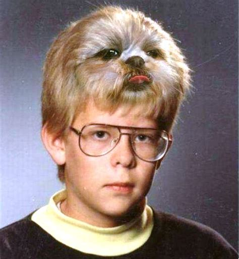 funny haircut haircut image funny very funny dog hairstyle picture funnyho com funny