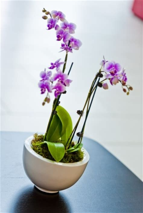 flowers for office desk 1000 images about beautiful flowering desk bowls for