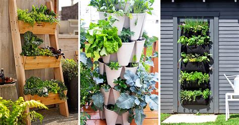 vertical vegetable garden ideas  beginners contemporist