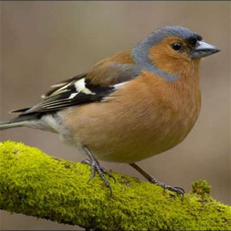 How To Keep Birds Patio by 20 Common Garden Birds Birds Birds