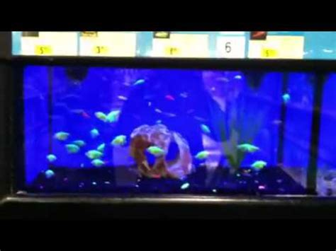 Glow in the dark fish at petco rave fishes youtube