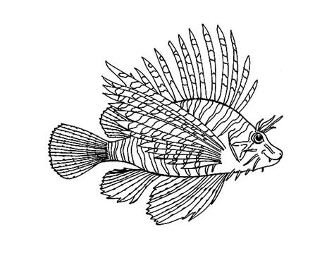 Lionfish Animal Coloring Pages Digital Drawing Zentangle Lionfish Coloring Page