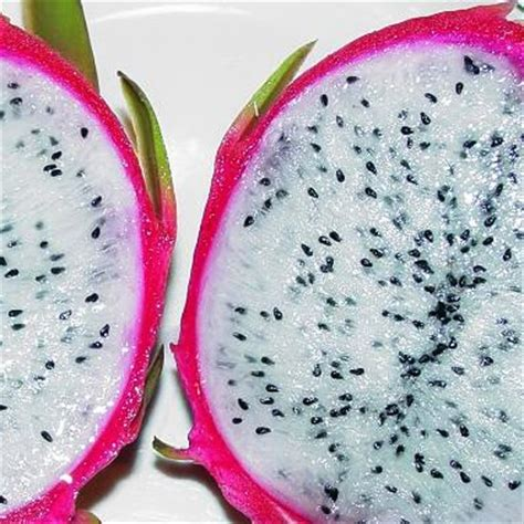 p fruits with seeds the rainforest garden i pitaya fool who doesn t grow