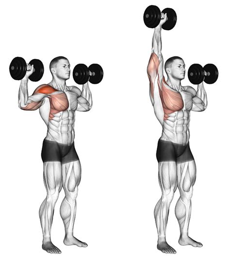 seated shoulder dumbbell press 8 simple at home shoulder leg exercises grabonrent