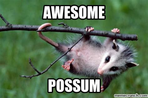 Awesome Memes - awesome possum
