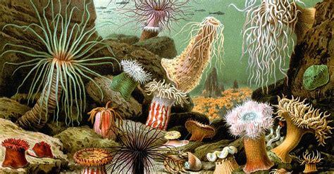 imagenes historicas sin copyright imagenes sin copyright dibujo de an 233 monas marinas