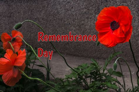 remembrance day        celebrated