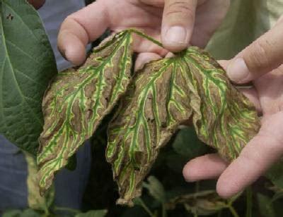 enfermedades de las plantas de interior estr 233 s en nuestras plantas
