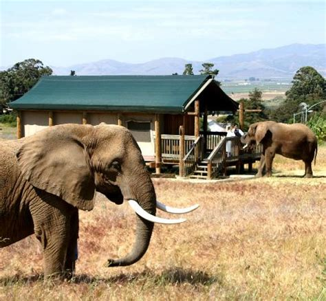 vision quest safari bed breakfast elephant breakfast delivery picture of vision quest