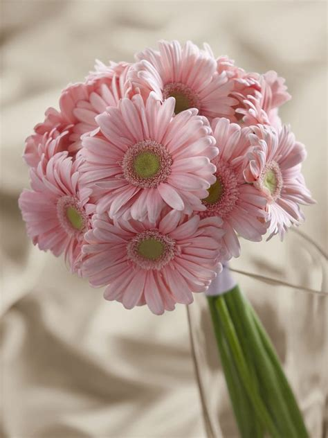 Ideas For Gerbera Flowers Pink Gerbera Bouquet Interflora Wedding Favors Flowers Venue Ideas Etc Etc Pinterest