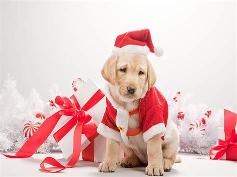 santa puppy santa msyugioh123 photo 36231957 fanpop