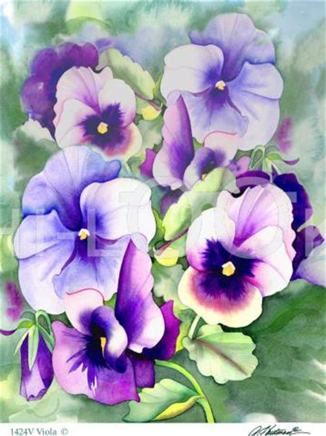 state flower of new jersey violet new jersey state flower hi look