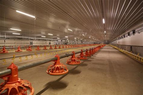 poultry house lighting systems poultry lighting system led poultry house light