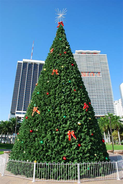 miami christmas tree photograph by ramunas bruzas