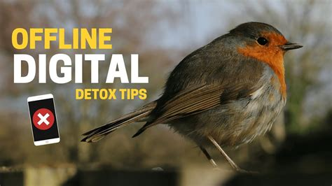 Digital Detox Tips by Digital Detox 8 Tips For Offline Productivity