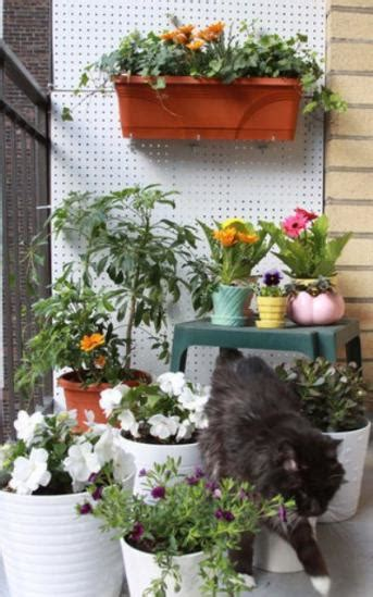 balcony kitchen gardening ideas for limited space blog 10 tips for a tiny balcony
