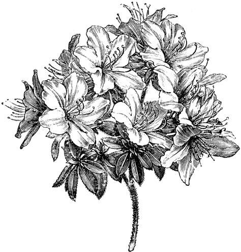 azalea tattoo designs azalea flower search ideas flower