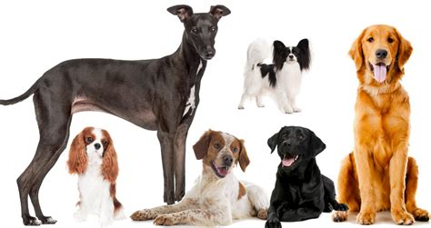best breeds for time owners what holistic veterinarians want you to