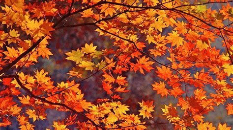 fall autumn fall leaves background dodskypict