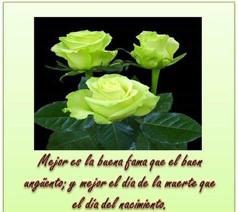 imagenes de rosas con frases cristianas hermosas im 225 genes de rosas blancas con frases de luto y