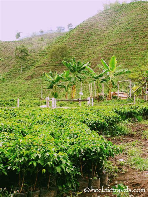 coffee plantation wallpaper coffee plantation wallpaper