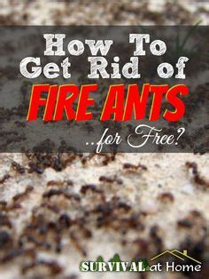 How To Get Rid Of Ants In Vegetable Garden by 1000 Images About Vegtable Gradens Great Ideas On