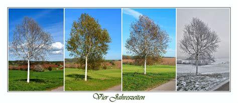 schöne gärten in deutschland die birke keltisches baumhoroskop birke charakter und