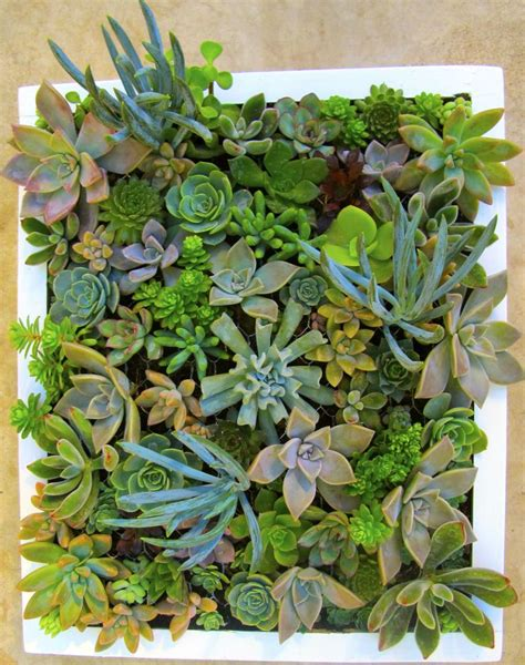 10 best cuadros de suculentas succulent frames images on