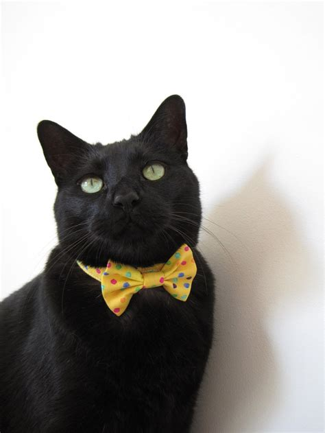 14 best cats in bow ties images on bowties