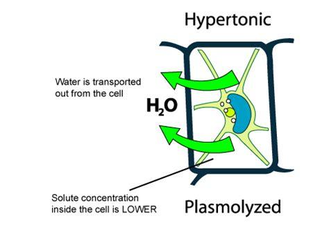 hypertonic diagram hypertonic solution causes symptoms treatment
