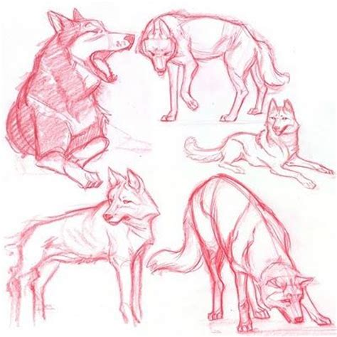 tutorial task werewolf 65 best images about wolf drawing references on pinterest