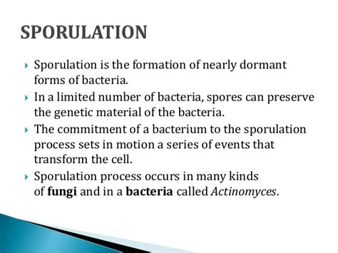 gyrotactic pattern formation of motile microorganisms in turbulence asexual reproduction